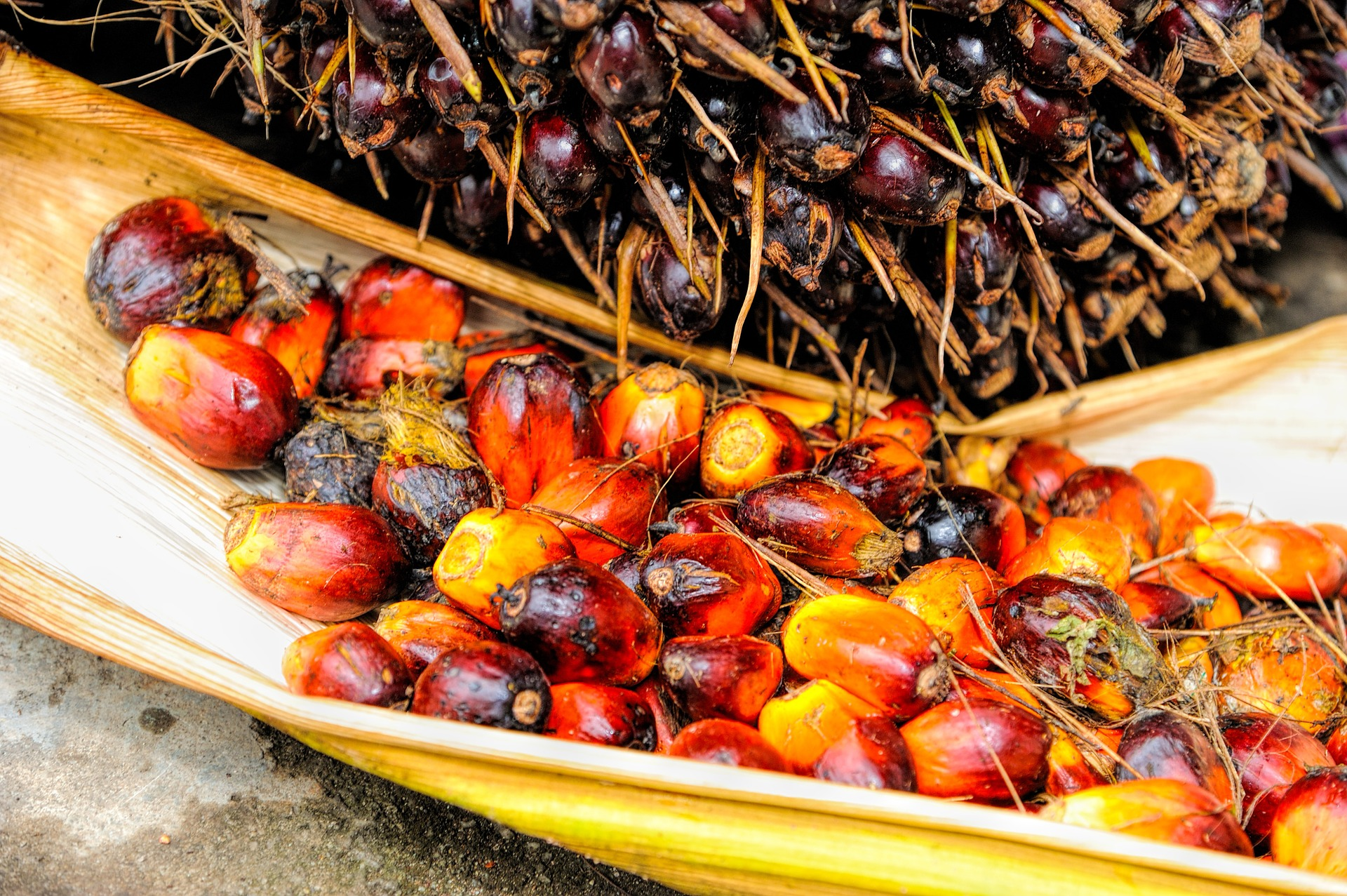 Gesundheitsrisiko Palmöl