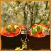 Schnelles Sushi zum Selbermachen mit Dr. Gabriela Hoppe | Erfolg durch Ernährung | Deine Ernährungsspezialistin & Heilpraktikerin in Hannover/Isernhagen | Bild by Canva